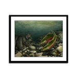 Save Our Salmon Framed Panel Print