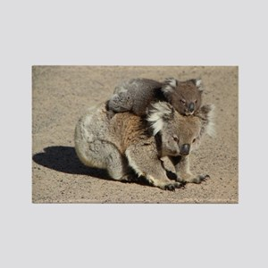 Baby Joey Koala Piggyback Ride Rectangle Magnet