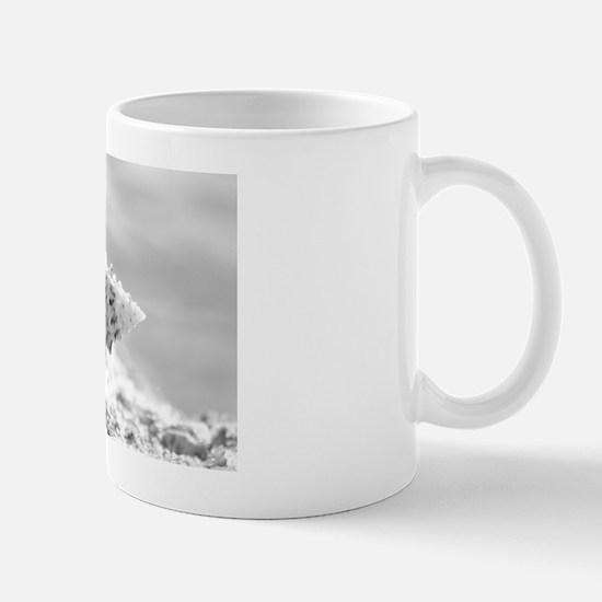 Baby Conch Mug