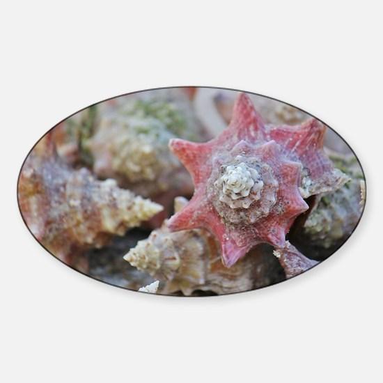 Conch Sticker (Oval)