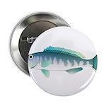 Green Jobfish Grey Snapper Uku 2.25