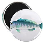 Green Jobfish Grey Snapper Uku Magnets