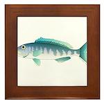 Green Jobfish Grey Snapper Uku Framed Tile