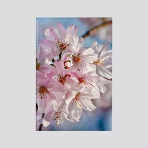 Japanese Cherry Blossoms Rectangle Magnet