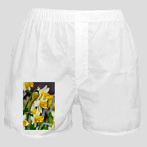 Yellow Daffodils Boxer Shorts