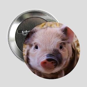 """sweet little piglet 2 2.25"""" Button"""