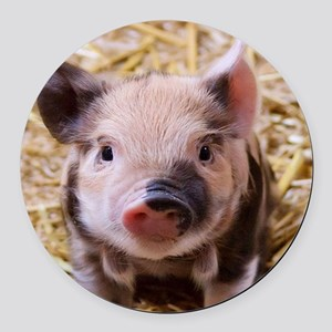 sweet little piglet 2 Round Car Magnet