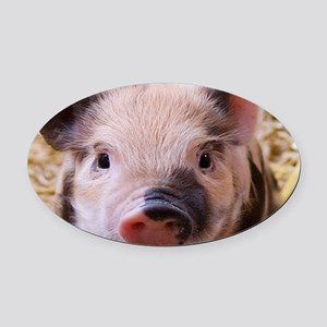 sweet little piglet 2 Oval Car Magnet