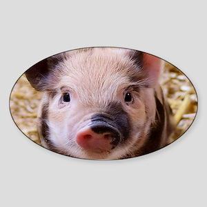 sweet little piglet 2 Sticker