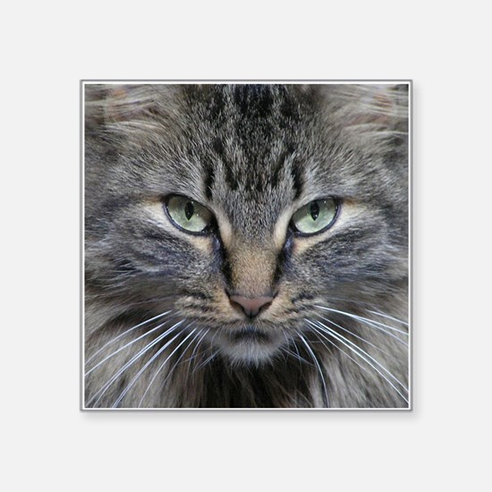 """Main Coon Kitty Cat Square Sticker 3"""" x 3"""""""