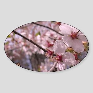 Cherry Blossoms Sticker (Oval)