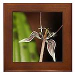 Fetid Adders Tongue Flower Framed Tile
