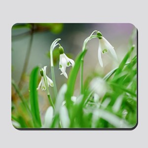Snowdrops in spring Mousepad