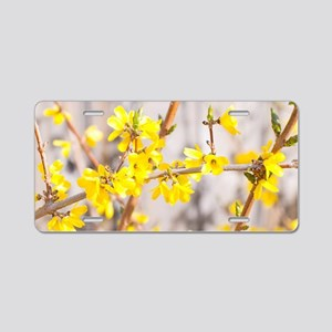Forsythia flowers  Aluminum License Plate