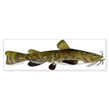 Flathead Catfish Bumper Sticker