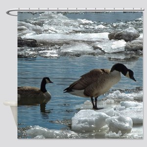 Geese And Cold Feet Shower Curtain