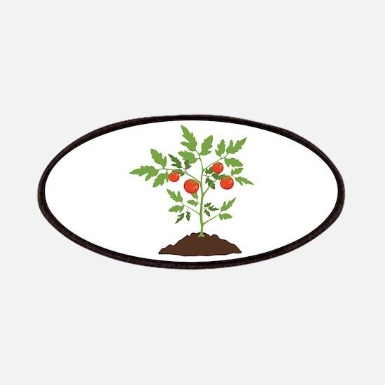Tomato Plant Patches