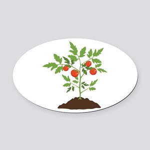 Tomato Plant Oval Car Magnet