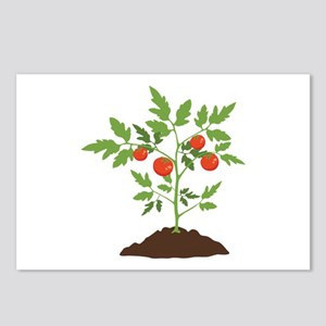 Tomato Plant Postcards (Package of 8)