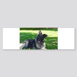 Kimber smiling pretty Bumper Sticker