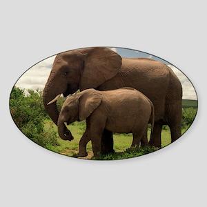 Wild elephants Sticker (Oval)