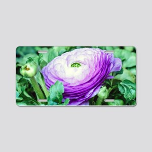 Purple Persian Buttercup Aluminum License Plate