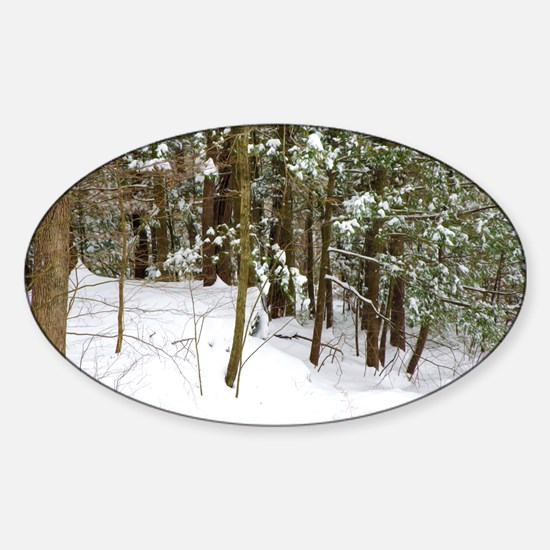 Winter forest Decal