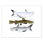 Three North American Catfish Posters