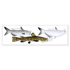 Three North American Catfish Bumper Sticker