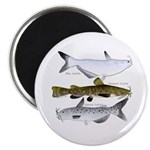 Three North American Catfish Magnets