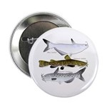 Three North American Catfish 2.25