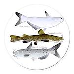 Three North American Catfish Round Car Magnet