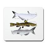 Three North American Catfish Mousepad