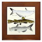 Three North American Catfish Framed Tile