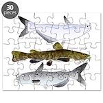 Three North American Catfish Puzzle