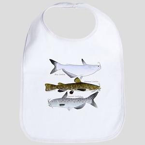 Three North American Catfish c Bib