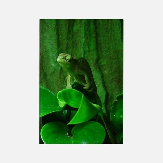 Green Reptil Rectangle Magnet