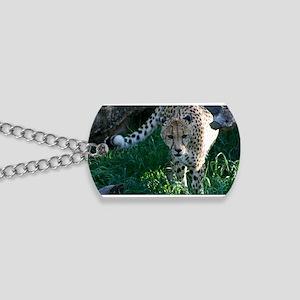 Hunting Prowling Cheetah at the Zoo Dog Tags