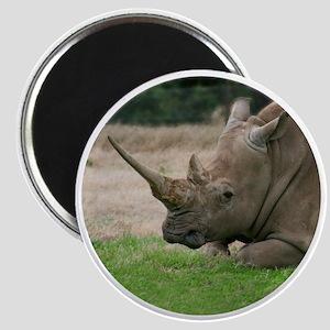 Rhinoceros Photo with Huge  Horn Magnet