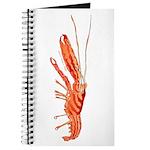 Pistol Snapping Shrimp Journal