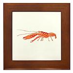 Pistol Snapping Shrimp Framed Tile