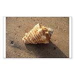 Conch Shell (Color) Sticker
