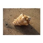 Conch Shell (Color) 5'x7'Area Rug