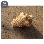 Conch Shell (Color) Puzzle