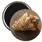 Conch Shell (Color) Magnets