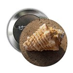 Conch Shell (Color) 2.25