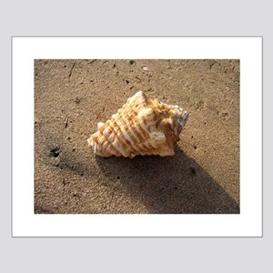 Conch Shell (Color) Posters
