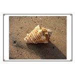 Conch Shell (Color) Banner