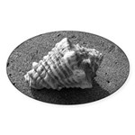 Conch Shell (Black and White) Sticker