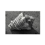 Conch Shell (Black and White) Magnets